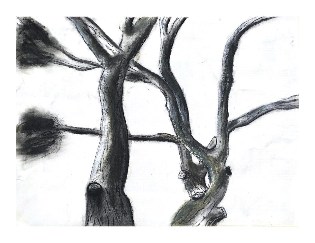 A charcoal sketch of an upward view of the stretching branches of a tree